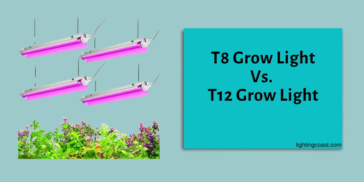 T8 Vs. T12 | What is The Real Difference That You Should Know!